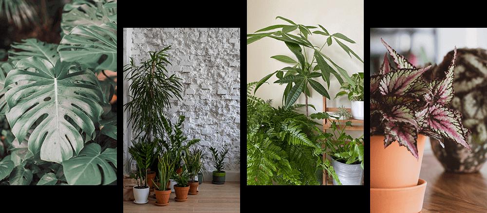 観葉植物の花4種