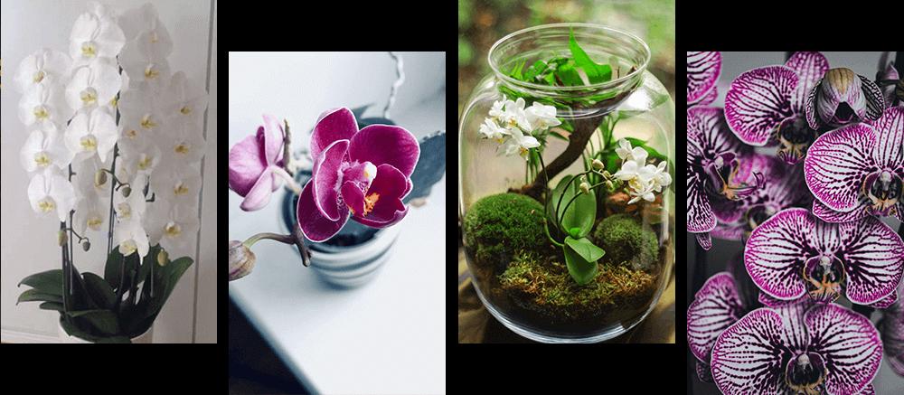 蘭の花4種