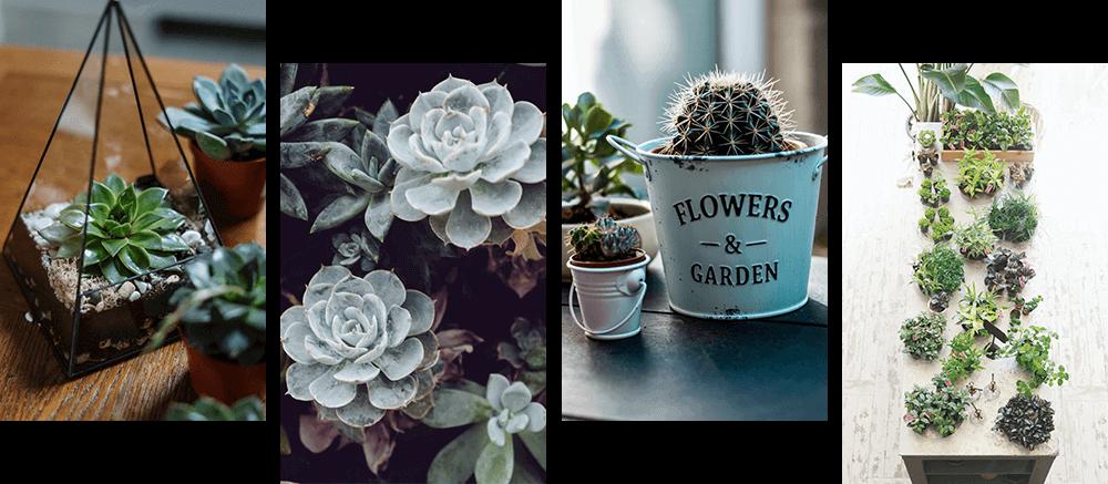 その他の花4種